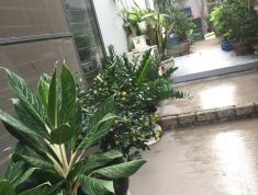 Cho Thuê Nhà Phố Phù Hợp Văn Phòng,Ở,Diện Tích 110m2 Giá 1500usd/Tháng