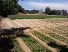 Bán đất mặt tiền đường Nguyễn Công Trứ, Ninh Thuận