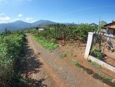Bán lô đất thổ vườn 1000 m2 ở Xã Đinh Lạc - Huyện Di Linh