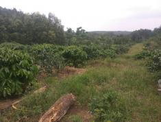 Chính chủ cần bán đất nông nghiệp Đường Hương Lộ 10, Xã Long Giao, Huyện Cẩm Mỹ, Đồng Nai