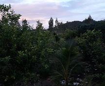 Em muốn bán trại chăn nuôi Đất ở xã pờ tó huyện IAPA GIA LAI