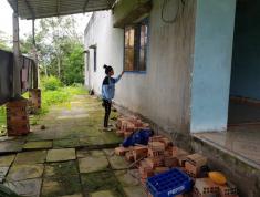 Chính chủ cần bán đất 246m2 và nhà tại Đường Tỉnh lộ 918, Xã Giai Xuân, Huyện Phong Điền, Cần Thơ