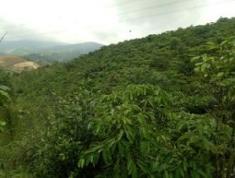 Tôi Nguyễn Văn Chung Chính Chủ Cần Bán Mảnh Vườn 6.480m2 (6 sào 480m2) đường Lê Thị Riêng, thôn 4
