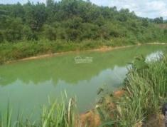 Cần bán vườn sầu riêng tại xã Hà Lâm, huyện Đạ Huoai, Lâm Đồng