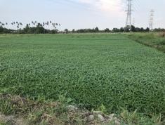 Chính chủ cần bán đất ấp 8,xã Bình Mỹ, huyện Củ Chi, Tp. Hồ Chí Minh