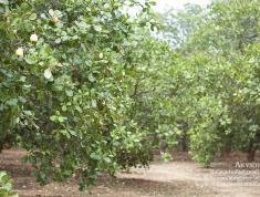 Chính Chủ cần bán Đất nông nghiệp làm trang trại tại Huyện Xuân Lộc