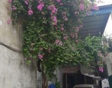 Chính chủ HOÀNG ĐỨC VINH cần bán nhà đất tại số 19, Phường Hùng Thắng, Tp Hạ Long, Quảng Ninh.