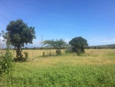 Tích lũy tài sản bđs bằng đầu tư Gốc đất vườn Bình Thuận giá chỉ từ 50 ngàn đồng 1 mét vuông