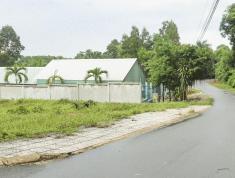 Bán đất phường Tam Phước - Biên Hòa - Đất biệt thư 5,5tr/m2 sổ riêng thổ cư